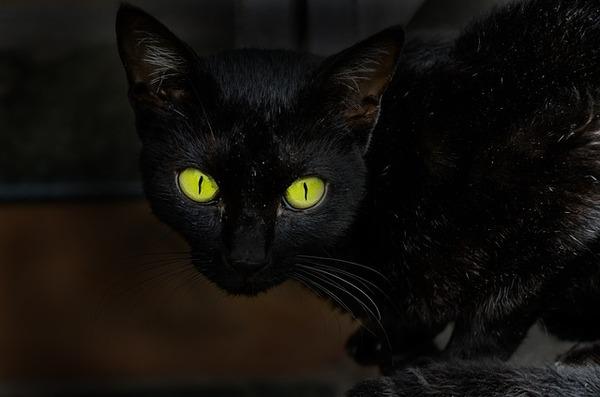 cat-2716206_640