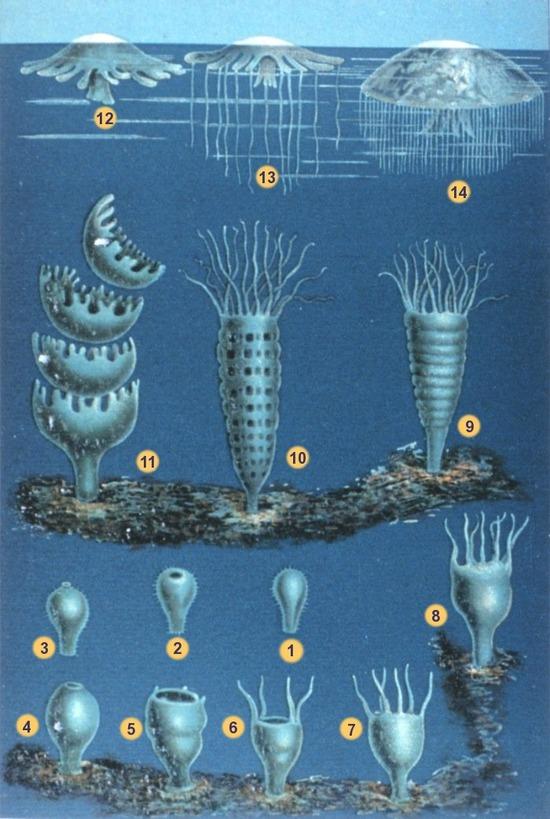 Schleiden-meduse-2