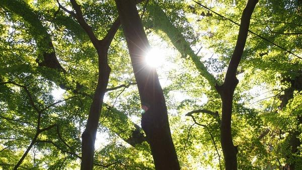 woods-344458_960_720