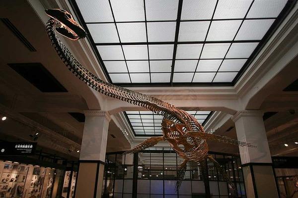800px-Futabasaurus