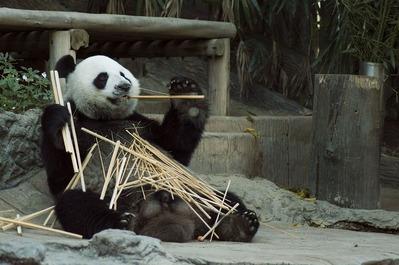 panda-1203101_960_720