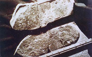 三葉虫を踏みつぶしたサンダルの靴跡