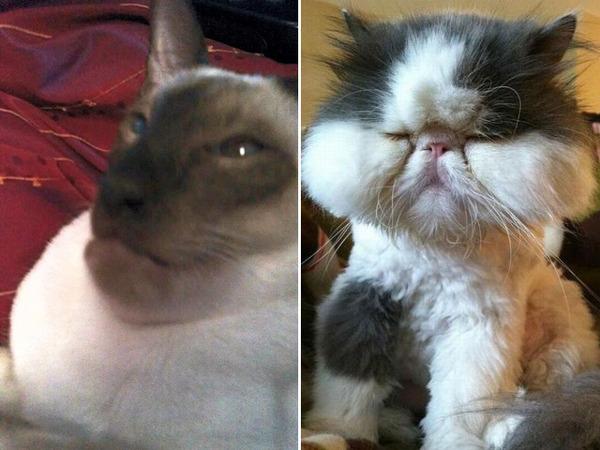 bees-vs-cats14