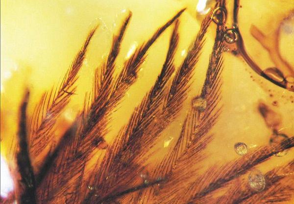 琥珀に閉じ込められた虫の画像を見せたい