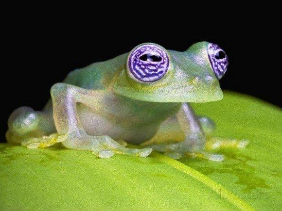 目に模様があるカエルがかわいい