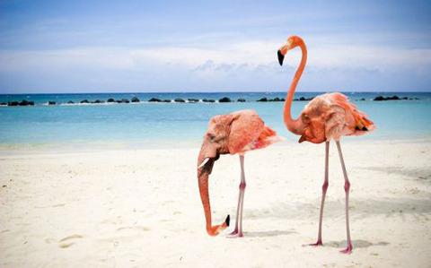 The Flamingant