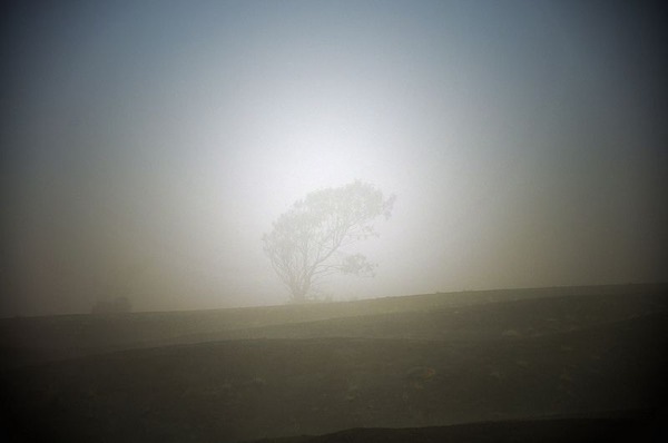Tree-in-the-mist