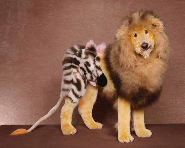 crazy-dog-grooming11