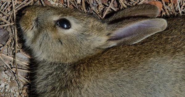 10a-dead-rabbit-1147073613
