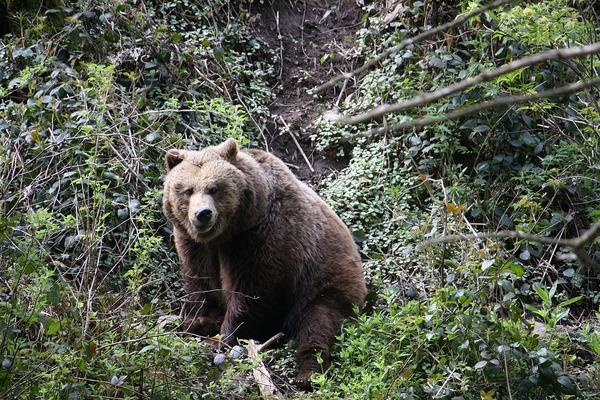 bear-2743028_960_720
