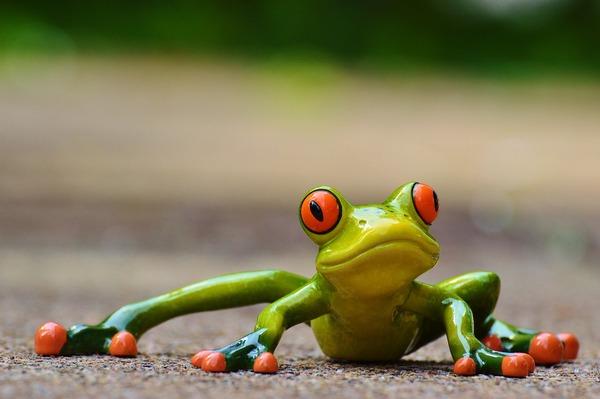 frog-927764_1280