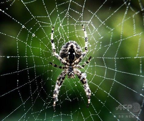 全世界でクモが1年間に食べる昆虫の量は4~8億トン 全人類の肉・魚の消費量に匹敵