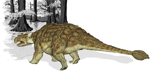 800px-Ankylosaurus_dinosaur