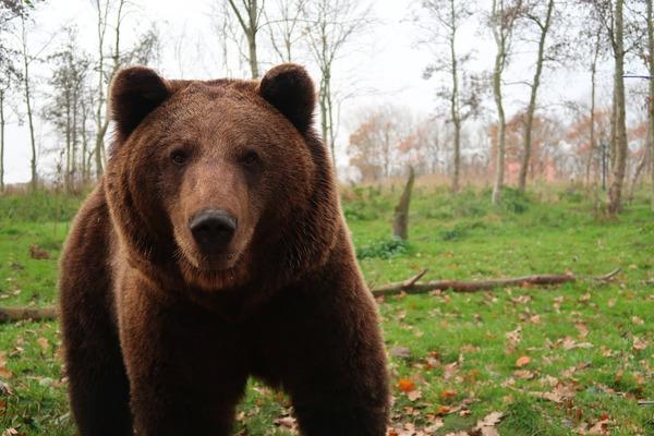 bear-3954950_1280