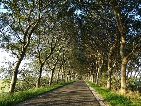 trees-1728462_640