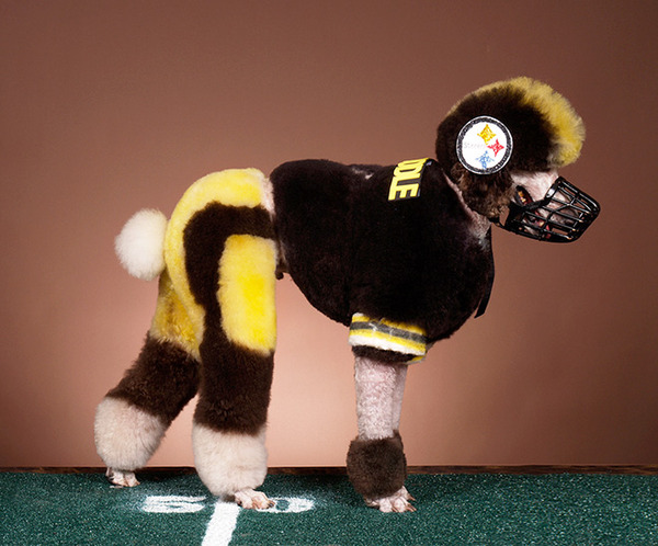 crazy-dog-grooming14