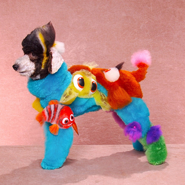 crazy-dog-grooming20