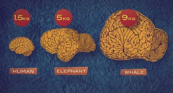 """悪人の脳は善人と比べて""""かなり小さい""""ことが判明 悪人になるかならないかは生まれつき"""