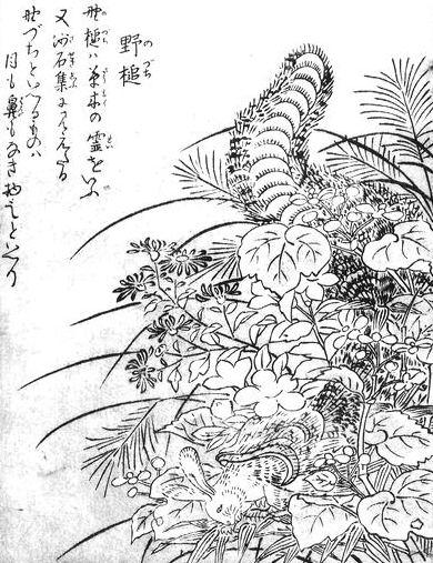 SekienNodzuchi