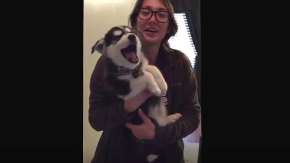 犬の鳴き声