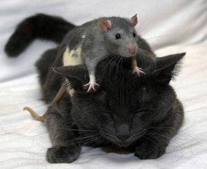猫不思議-