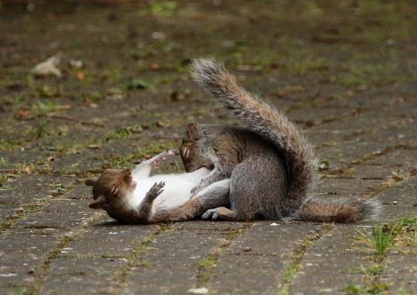 PAY-PROD-THEYRE-NUTTERS-NINJA-SQUIRRELS-SNAPPED-IN-AERIAL-DUEL-3
