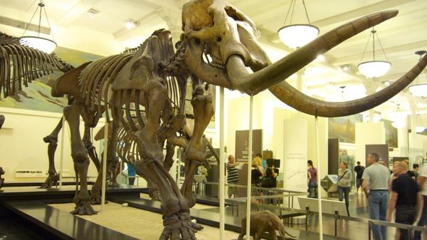 Mammoth_2