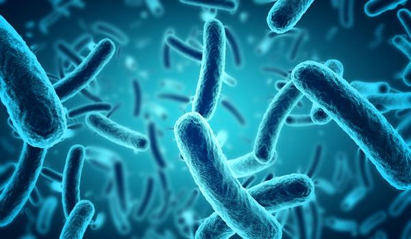 ファーwwww有用微生物群のWikipediaがまるでアンサイクロペディアなんやが【一部リンク先閲覧注意】
