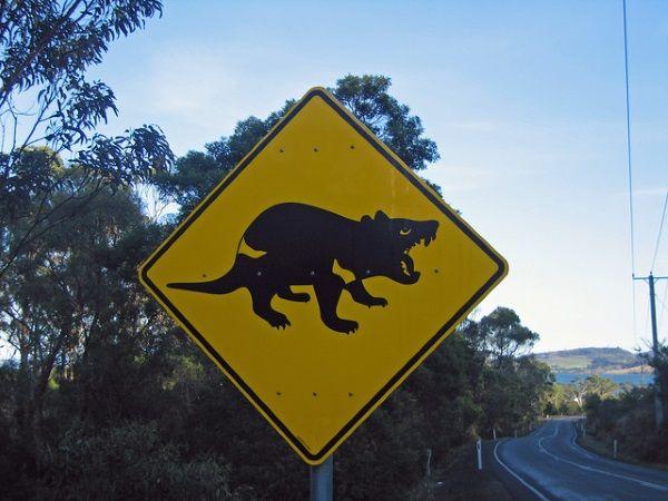 Tasmanian Devils 3