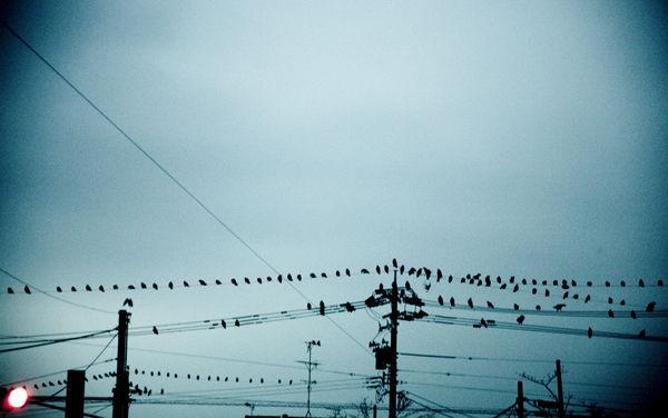 鳥が怖い、気持ち悪い、嫌いって奴いる?