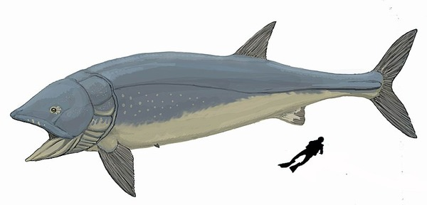 800px-Leedsichthys_problematicus