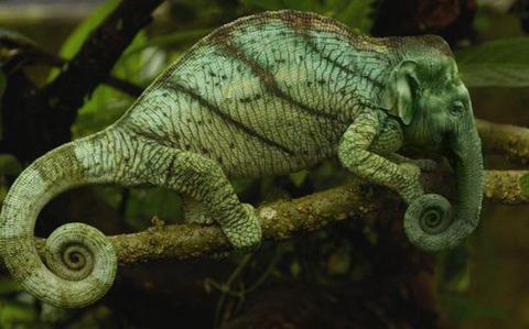 The Elemeleon