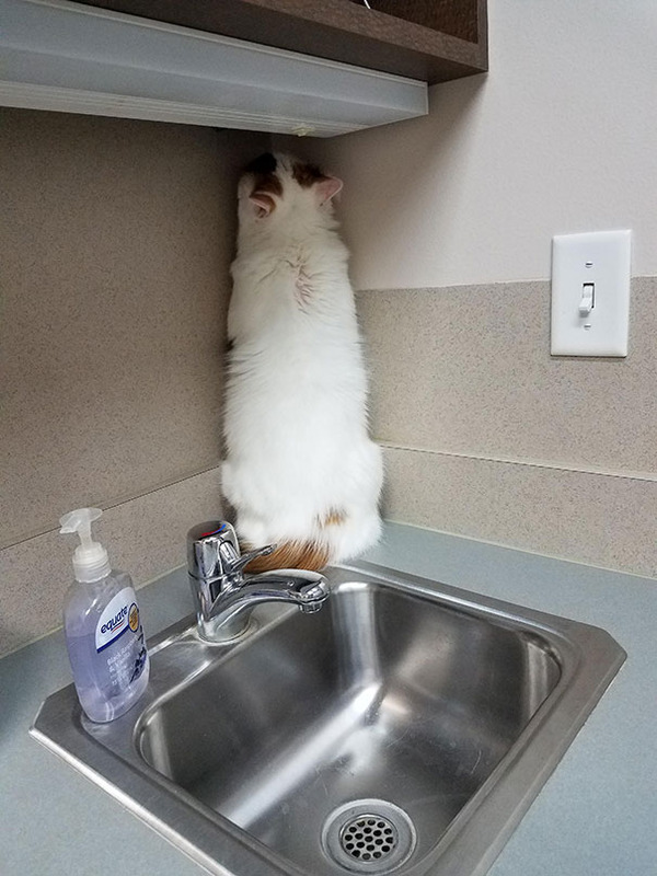 funny-scared-cats-vet-clinic-43-5bb70b9b4efa9__605