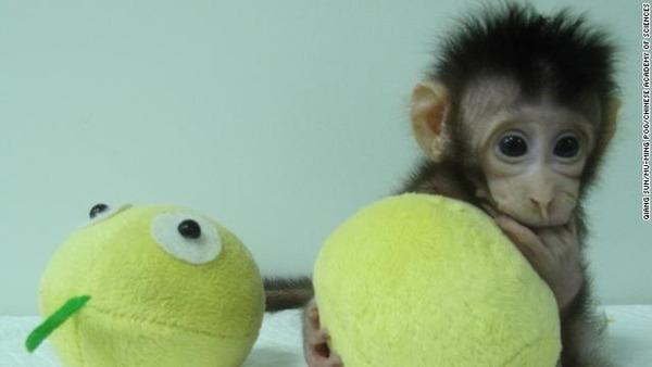 monkey-clones-hua-hua-3