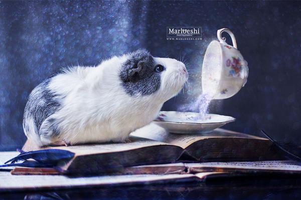 Mieps-the-photogenic-piggy-57da554f5adcf__880
