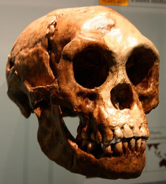 539px-Homo_floresiensis