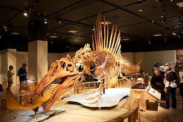 640px-Spinosaurus_swimming