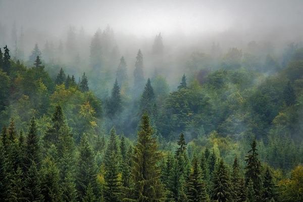 landscape-975091_640