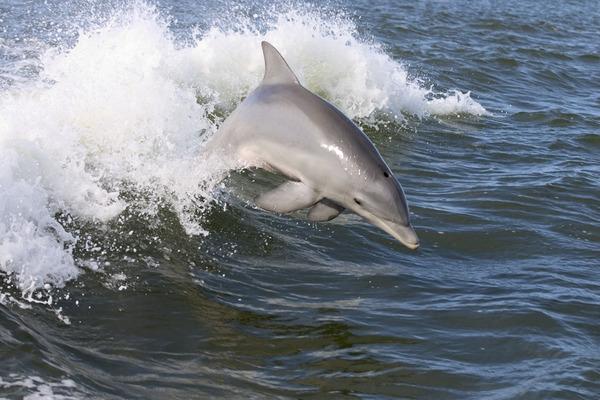 Dolphin,2007-4-13
