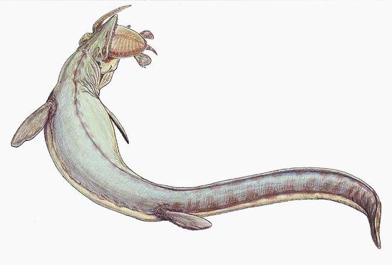 800px-Mosasaurus_21copy