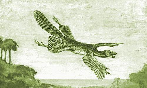 Tetrapteryx