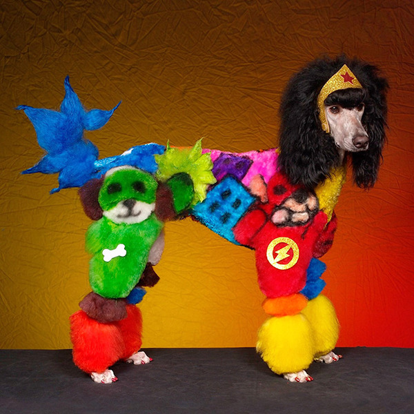 crazy-dog-grooming8