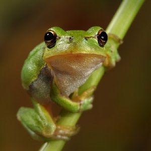表情がかわいいカエル