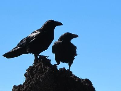 birds-433965_960_720