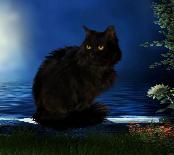 blackcat-1716672_960_720