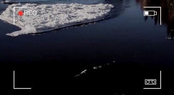 【UMA】アラスカに巨大水棲UMAアイスモンスターが出現!!