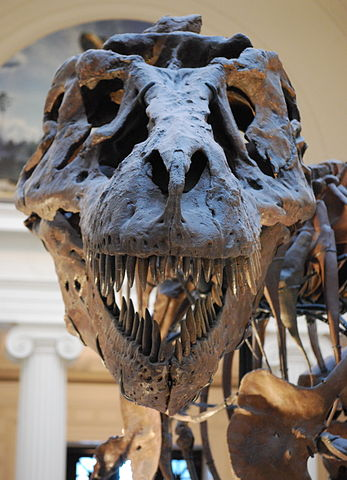347px-Sue_TRex_Skull_Full_Frontal
