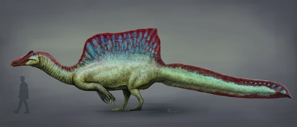 1920px-Spinosaurus_2020_reconstruction