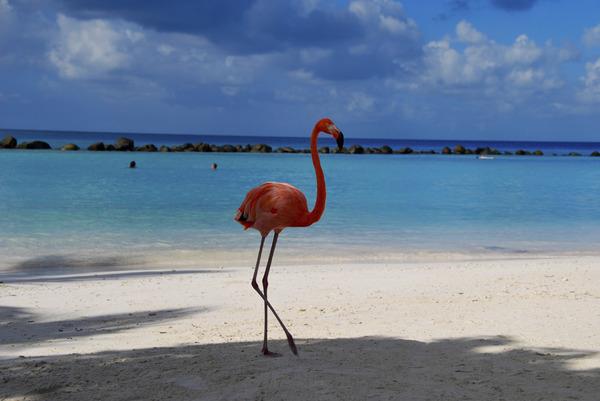 【愛鳥週間】北中南米の国鳥を画像付きで紹介していく