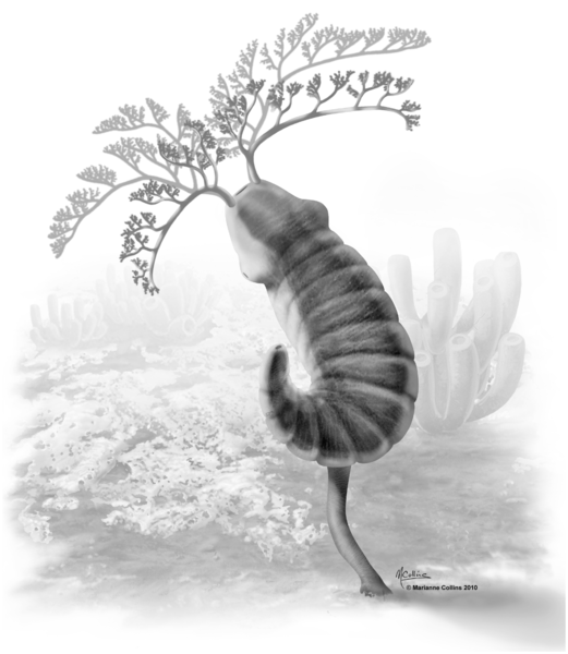 521px-Herpetogaster_collinsi_reconstruction